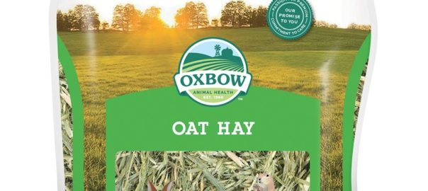 can guinea pigs eat oat hay